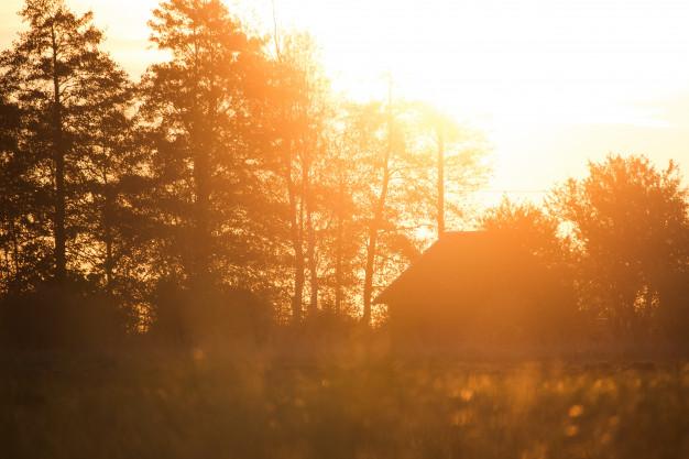 Hus med träd i solsken